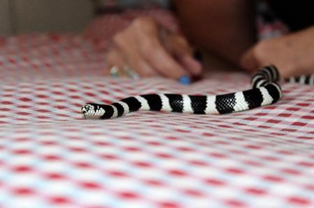 espantar uma cobra