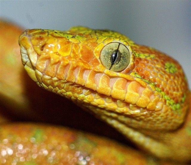 anatomia das cobras