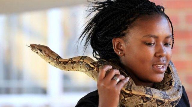 criar cobra