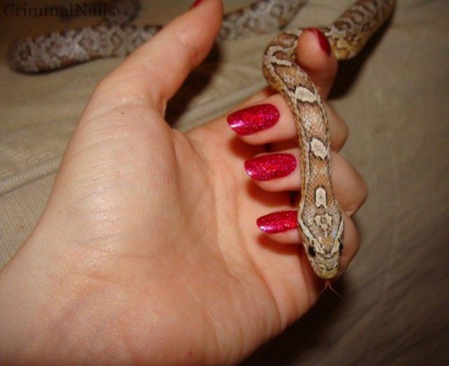 Como fazer uma alimentação forçada em cobras