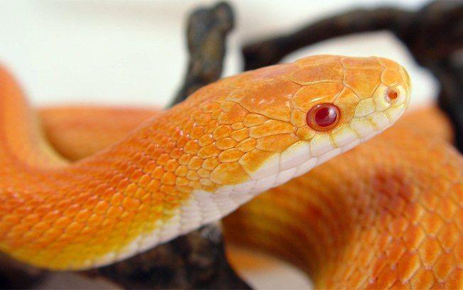 Doenças mais comuns de cobras em cativeiros